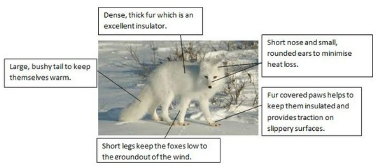 Arctic Adaptations - Competition in the Arctic